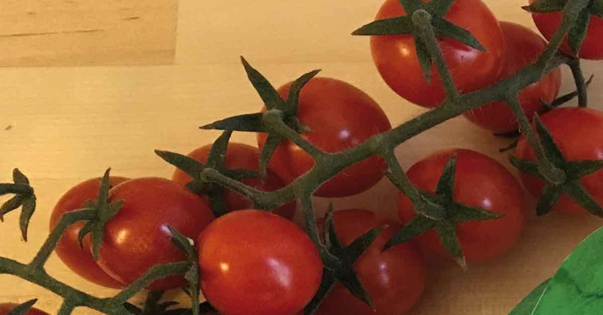 pomodoro ciliegino igp